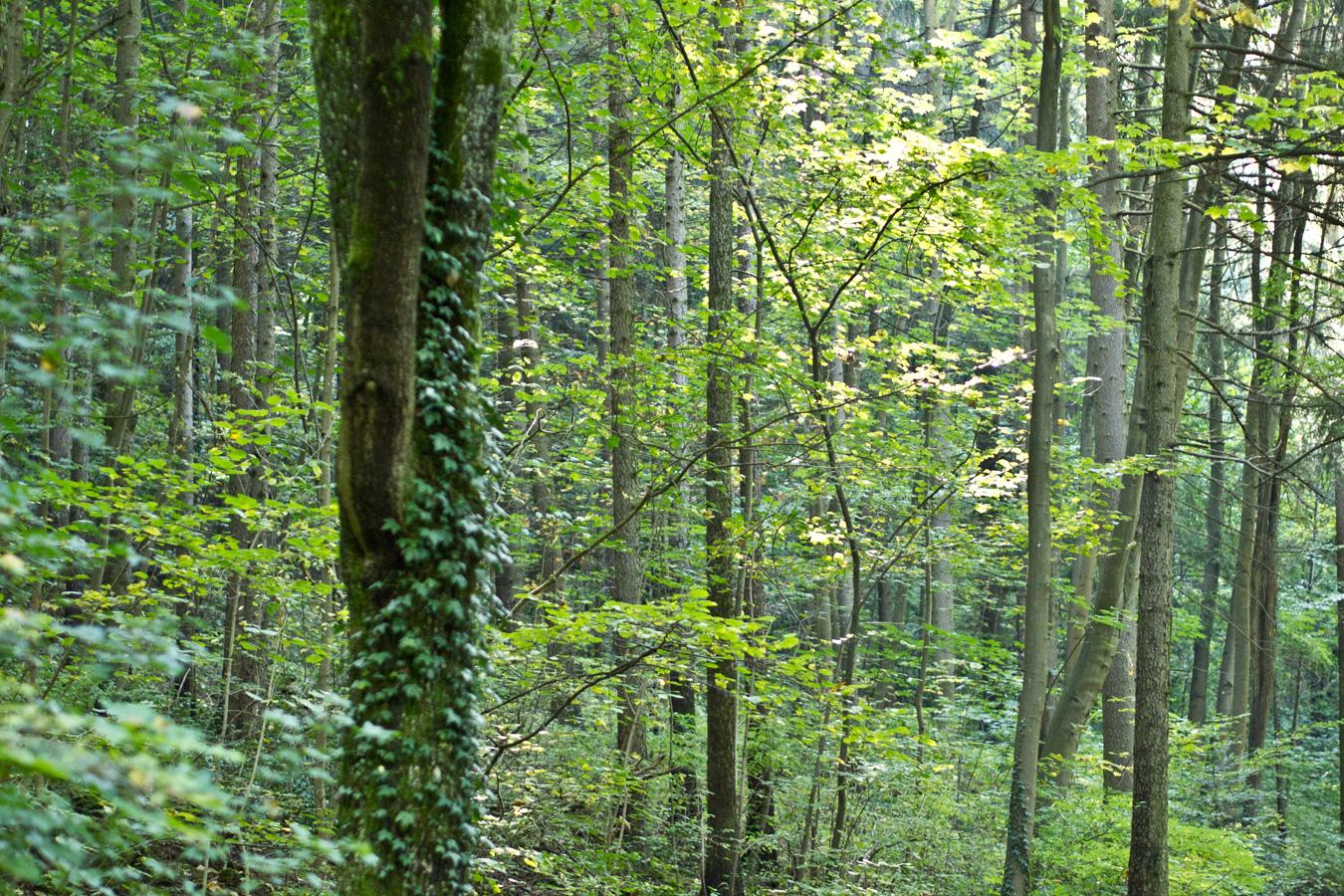 Wald & Wissen: Nachhaltigkeit in der Forstwirtschaft