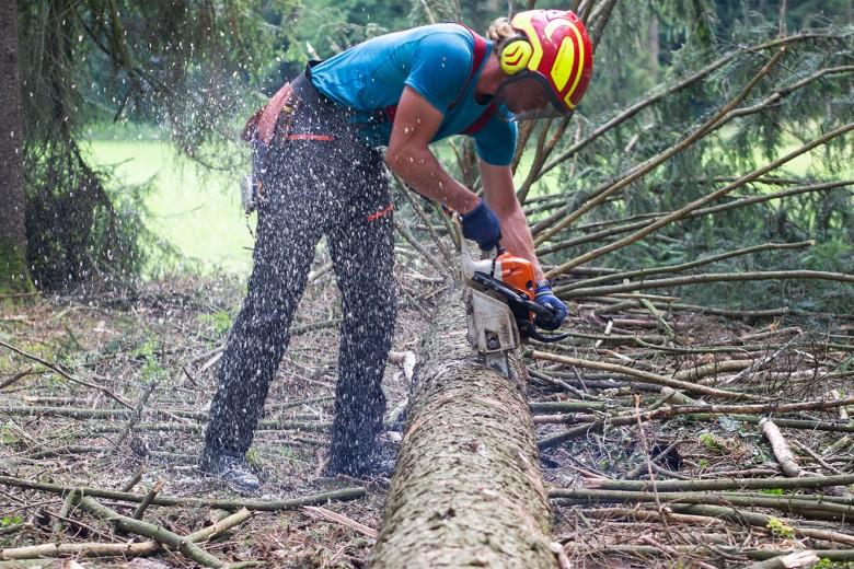 Entasten eines Baumes