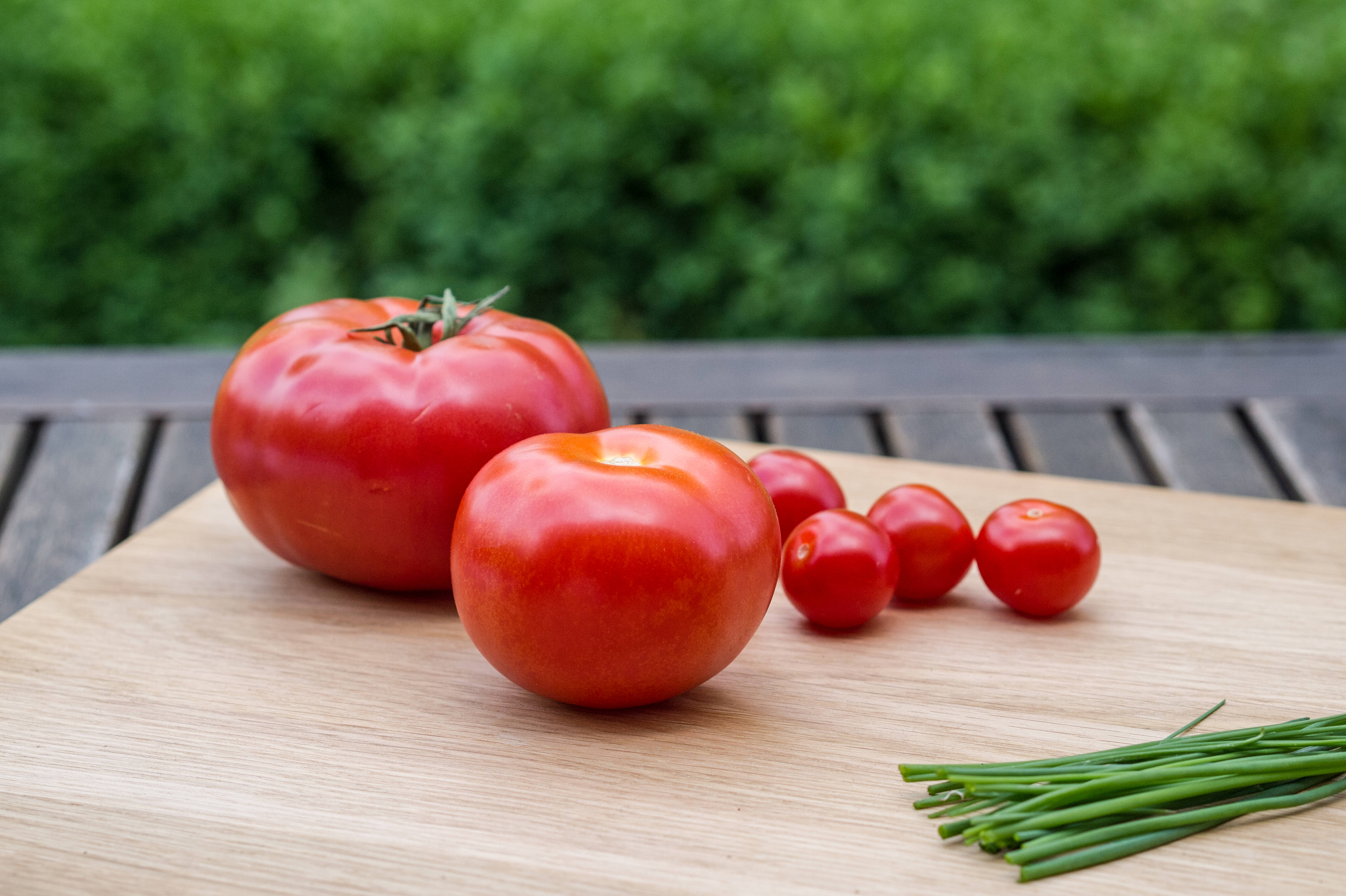 live-tomaten
