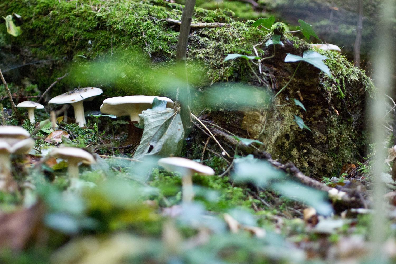 totholz-lebensraum