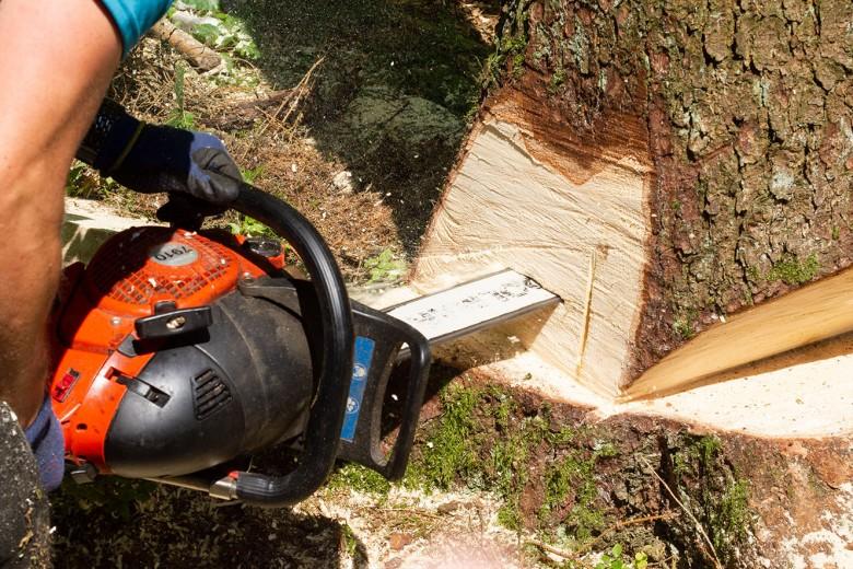 Stechschnitt beim Fällen eines Baumes