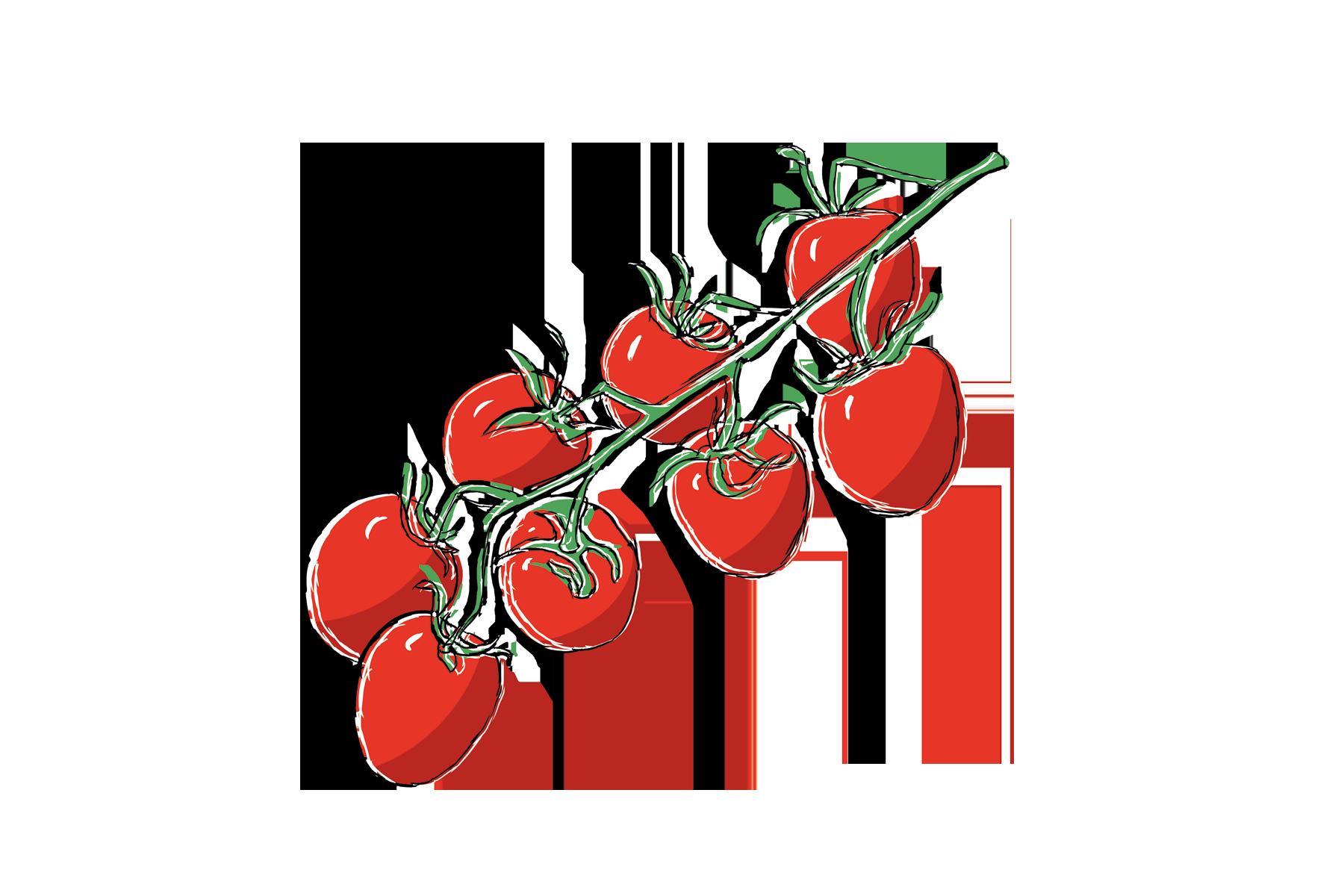 tomate-saisonkalender