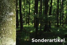 Sonderartikel: Messerblock Nussbaum ohne Loch