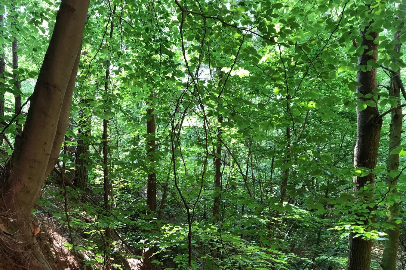 Wald & Wissen: Nachhaltigkeit erkennen
